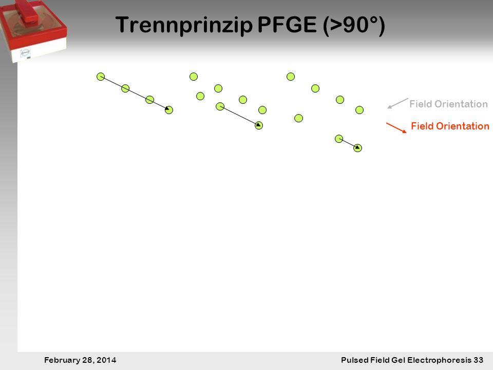 28. Februar 2014 Pulsfeldgelelektrophorese.33 February 28, 2014 Pulsed Field Gel Electrophoresis 33 Trennprinzip PFGE (>90°) Field Orientation