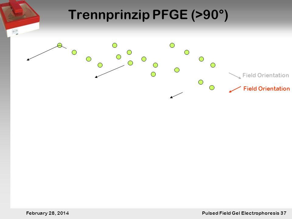 28. Februar 2014 Pulsfeldgelelektrophorese.37 February 28, 2014 Pulsed Field Gel Electrophoresis 37 Trennprinzip PFGE (>90°) Field Orientation