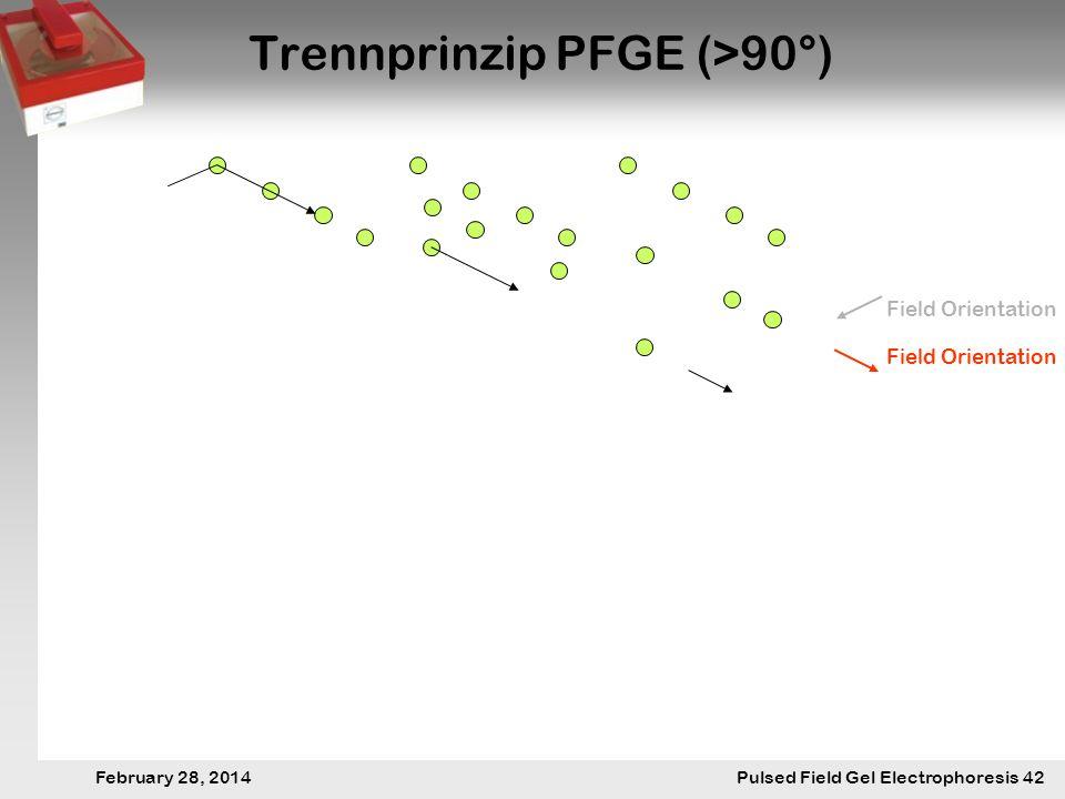 28. Februar 2014 Pulsfeldgelelektrophorese.42 February 28, 2014 Pulsed Field Gel Electrophoresis 42 Trennprinzip PFGE (>90°) Field Orientation