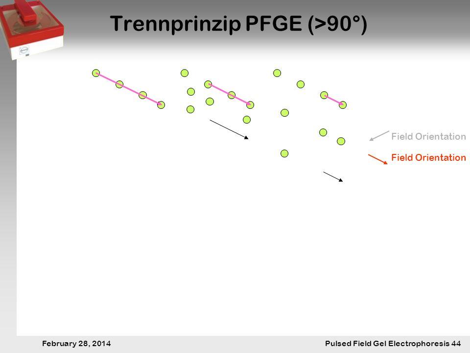 28. Februar 2014 Pulsfeldgelelektrophorese.44 February 28, 2014 Pulsed Field Gel Electrophoresis 44 Trennprinzip PFGE (>90°) Field Orientation