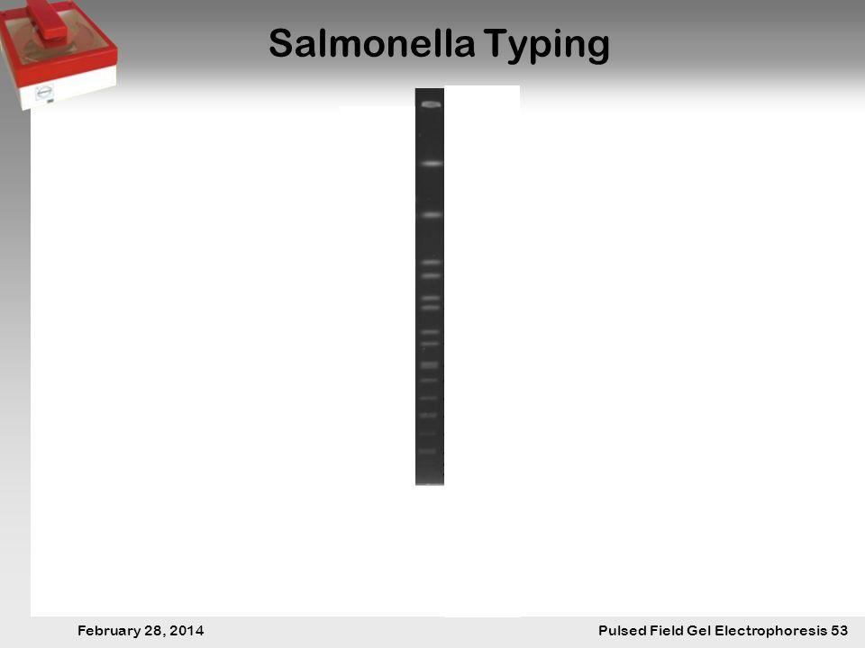 28. Februar 2014 Pulsfeldgelelektrophorese.53 February 28, 2014 Pulsed Field Gel Electrophoresis 53 Salmonella Typing