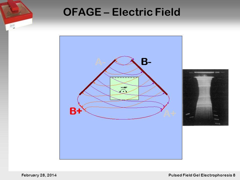 28. Februar 2014 Pulsfeldgelelektrophorese.8 February 28, 2014 Pulsed Field Gel Electrophoresis 8 OFAGE – Electric Field >>90°