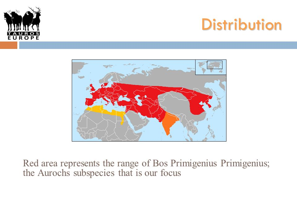 Distribution Red area represents the range of Bos Primigenius Primigenius; the Aurochs subspecies that is our focus
