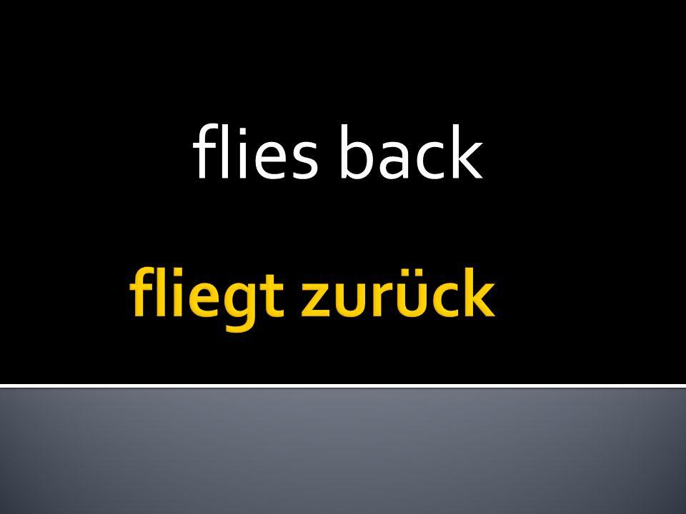 flies back
