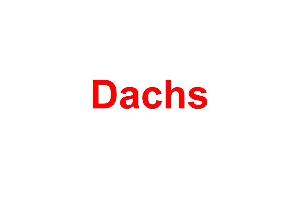 Dachs