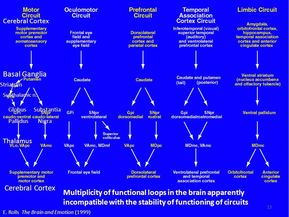 E. Rolls The Brain and Emotion (1999) Thalamus Striatum Basal Ganglia Cerebral Cortex Globus Pallidus Substantia Nigra Subthalamic n. Multiplicity of