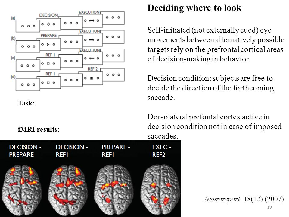 19 Deciding where to look Self-initiated (not externally cued) eye movements between alternatively possible targets rely on the prefrontal cortical areas of decision-making in behavior.