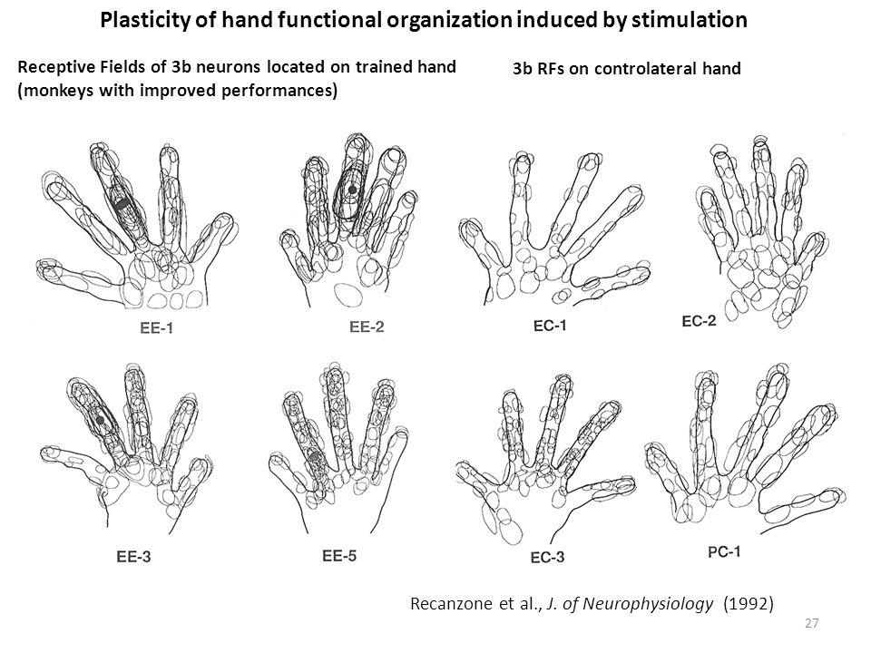 27 Recanzone et al., J.