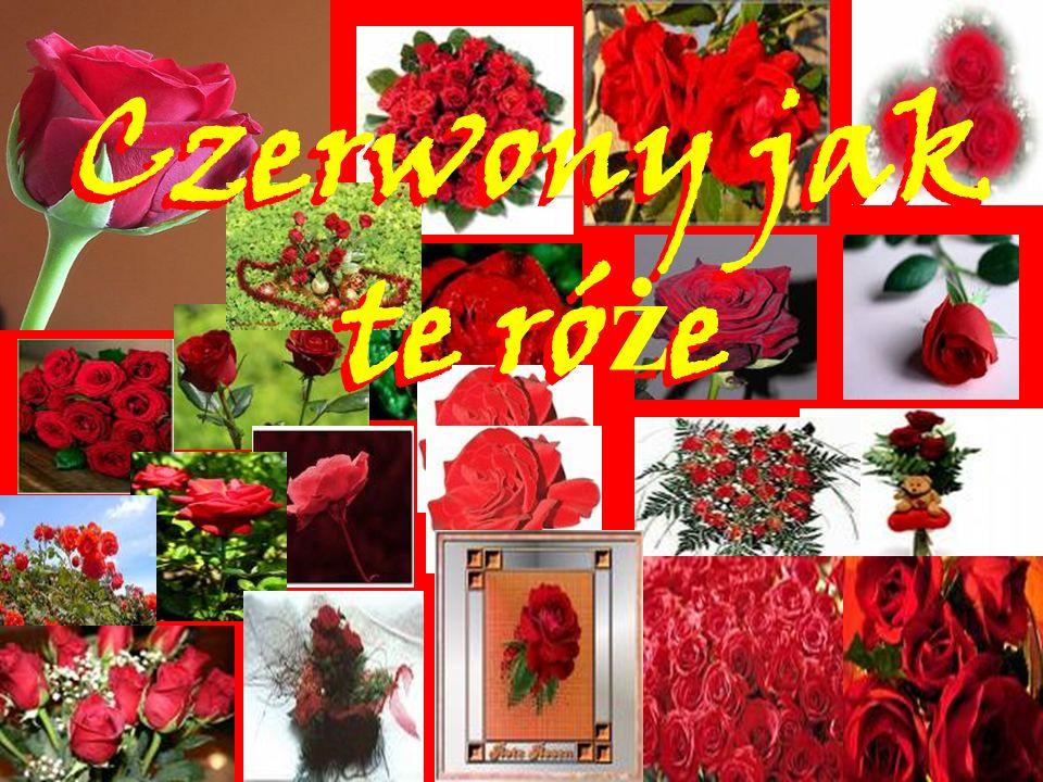 Czerwony jak te ró ż e