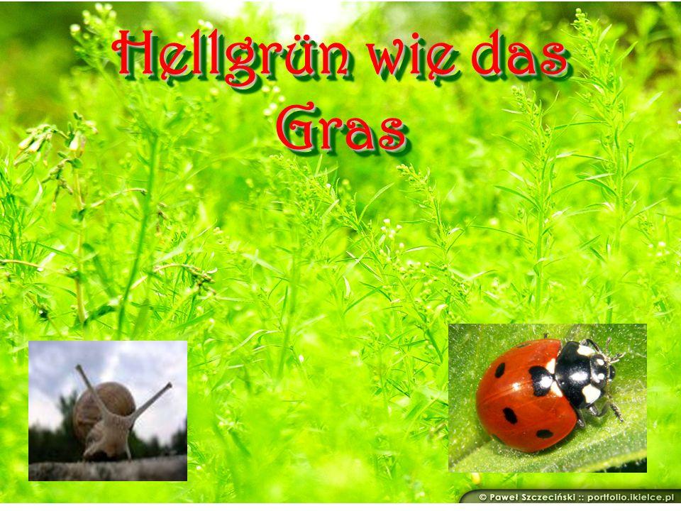 Hellgrün wie das Gras