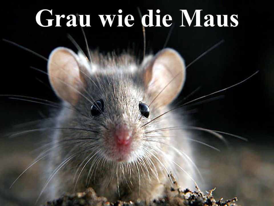 Grau wie die Maus