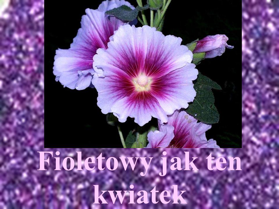 Fioletowy jak ten kwiatek
