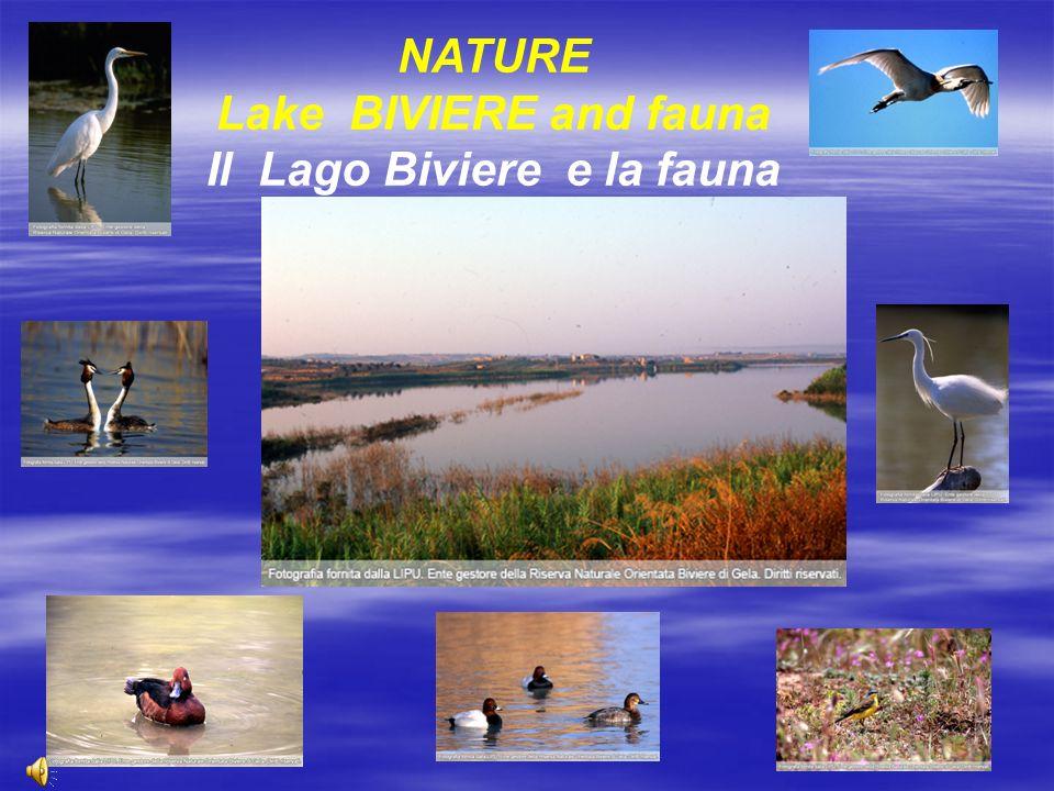 NATURE Lake BIVIERE and fauna Il Lago Biviere e la fauna