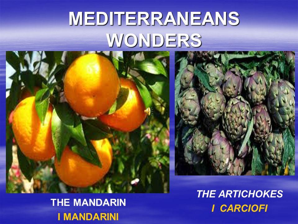 MEDITERRANEANS WONDERS THE MANDARIN I MANDARINI THE ARTICHOKES I CARCIOFI