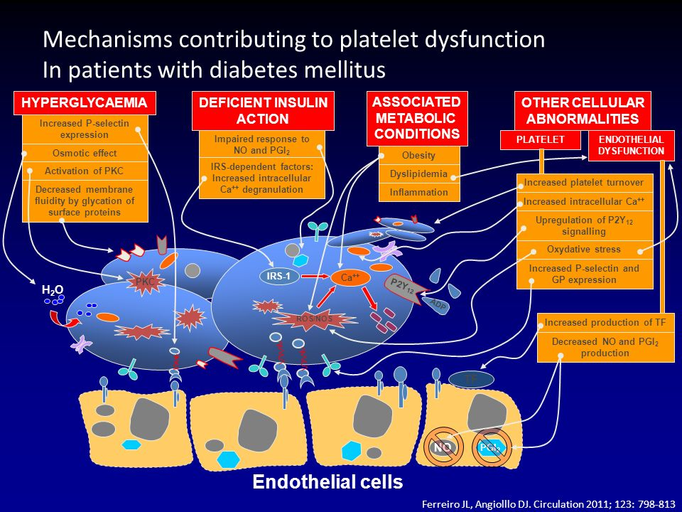 Mechanisms contributing to platelet dysfunction In patients with diabetes mellitus PKC ROS/NOS IRS-1 Ca ++ TF PGI 2 NO Endothelial cells H2OH2O P2Y 12 ADP HYPERGLYCAEMIA Increased P-selectin expression Osmotic effect Activation of PKC Decreased membrane fluidity by glycation of surface proteins DEFICIENT INSULIN ACTION Impaired response to NO and PGI 2 IRS-dependent factors: Increased intracellular Ca ++ degranulation ASSOCIATED METABOLIC CONDITIONS Obesity Dyslipidemia Inflammation OTHER CELLULAR ABNORMALITIES PLATELETENDOTHELIAL DYSFUNCTION Increased platelet turnover Upregulation of P2Y 12 signalling Increased intracellular Ca ++ Oxydative stress Increased P-selectin and GP expression Increased production of TF Decreased NO and PGI 2 production Ferreiro JL, Angiolllo DJ.