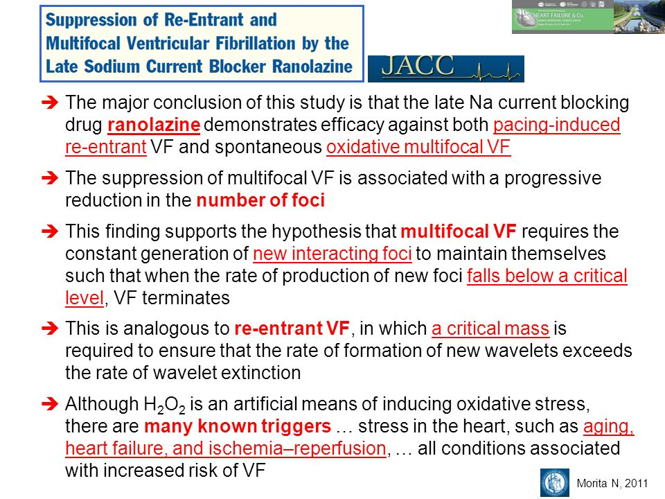 The major conclusion of this study is that the late Na current blocking drug ranolazine demonstrates efficacy against both pacing-induced re-entrant VF and spontaneous oxidative multifocal VF The suppression of multifocal VF is associated with a progressive reduction in the number of foci This finding supports the hypothesis that multifocal VF requires the constant generation of new interacting foci to maintain themselves such that when the rate of production of new foci falls below a critical level, VF terminates This is analogous to re-entrant VF, in which a critical mass is required to ensure that the rate of formation of new wavelets exceeds the rate of wavelet extinction Although H 2 O 2 is an artificial means of inducing oxidative stress, there are many known triggers … stress in the heart, such as aging, heart failure, and ischemia–reperfusion, … all conditions associated with increased risk of VF Morita N, 2011