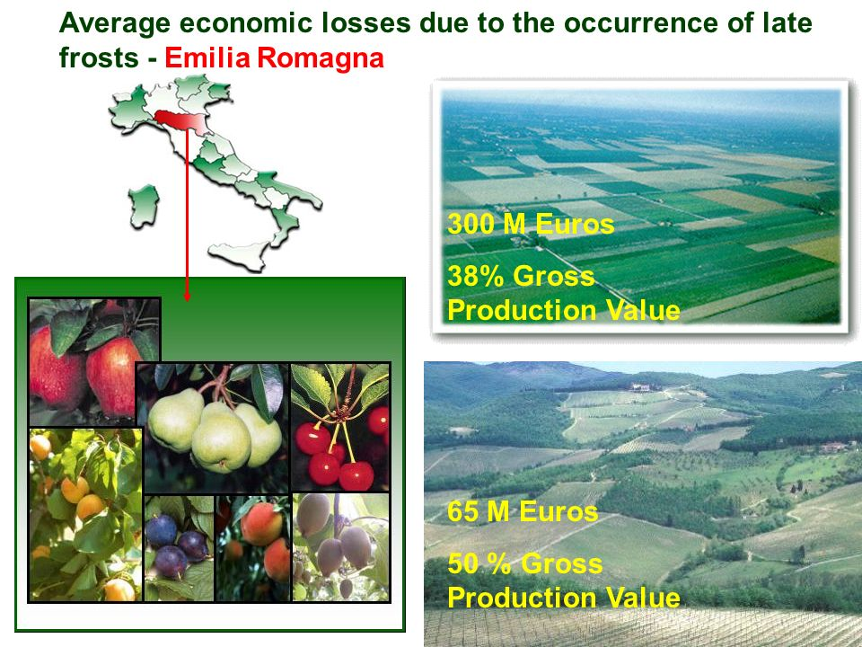 Average economic losses due to the occurrence of late frosts - Emilia Romagna 300 M Euros 38% Gross Production Value 65 M Euros 50 % Gross Production Value