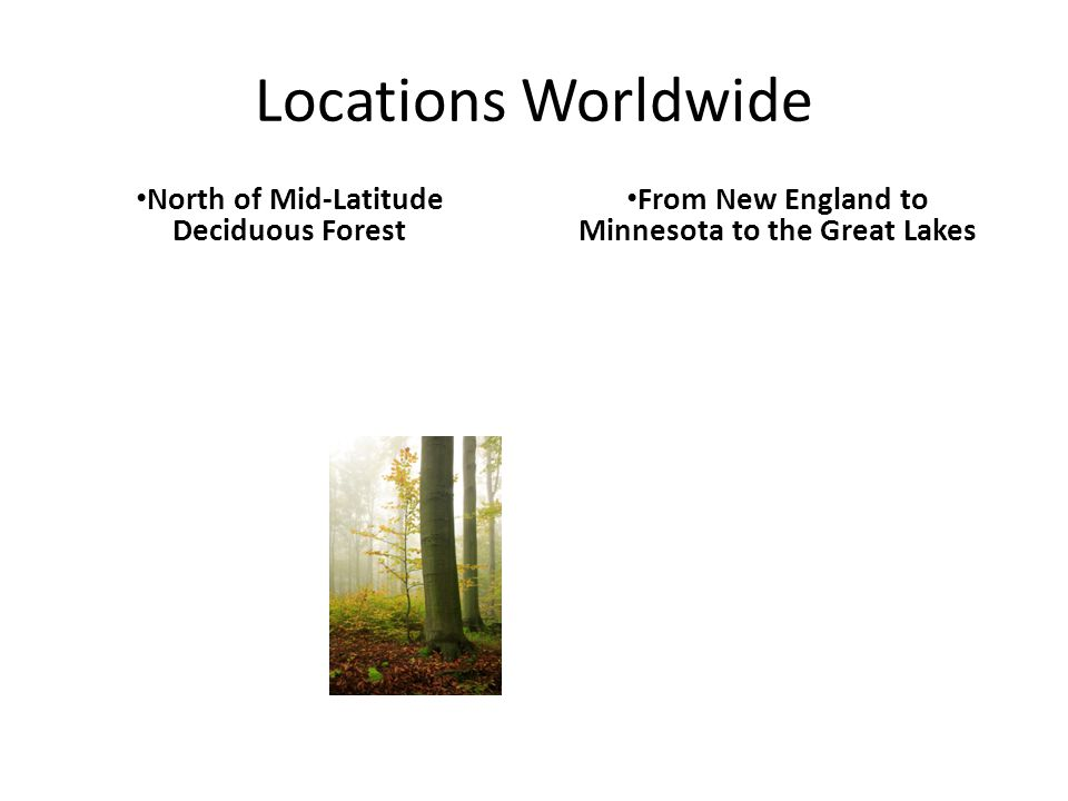 Locations Worldwide North of Mid-Latitude Deciduous Forest From New England to Minnesota to the Great Lakes