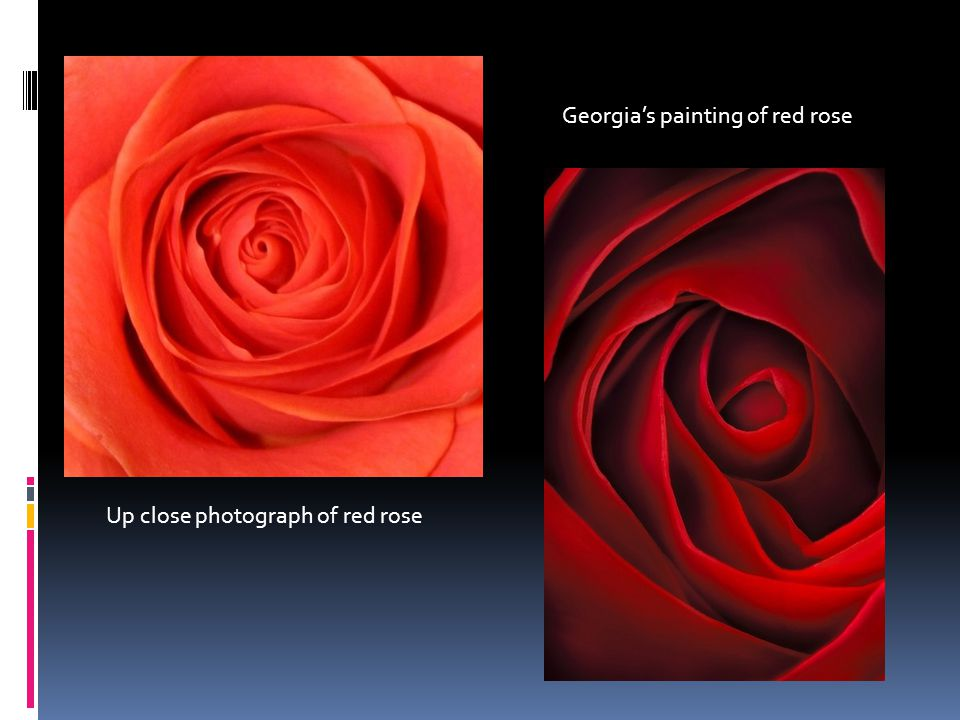 Up close photograph of red rose Georgia's painting of red rose