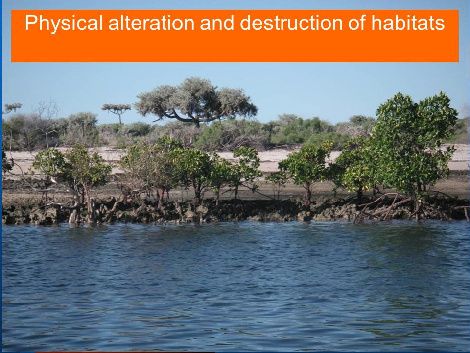 UNEP/GEF WIO-LaB Project18 Physical alteration and destruction of habitats