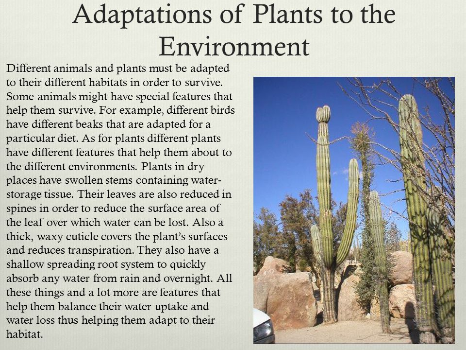 Adaptations of Plants to the Environment Different animals and plants must be adapted to their different habitats in order to survive.