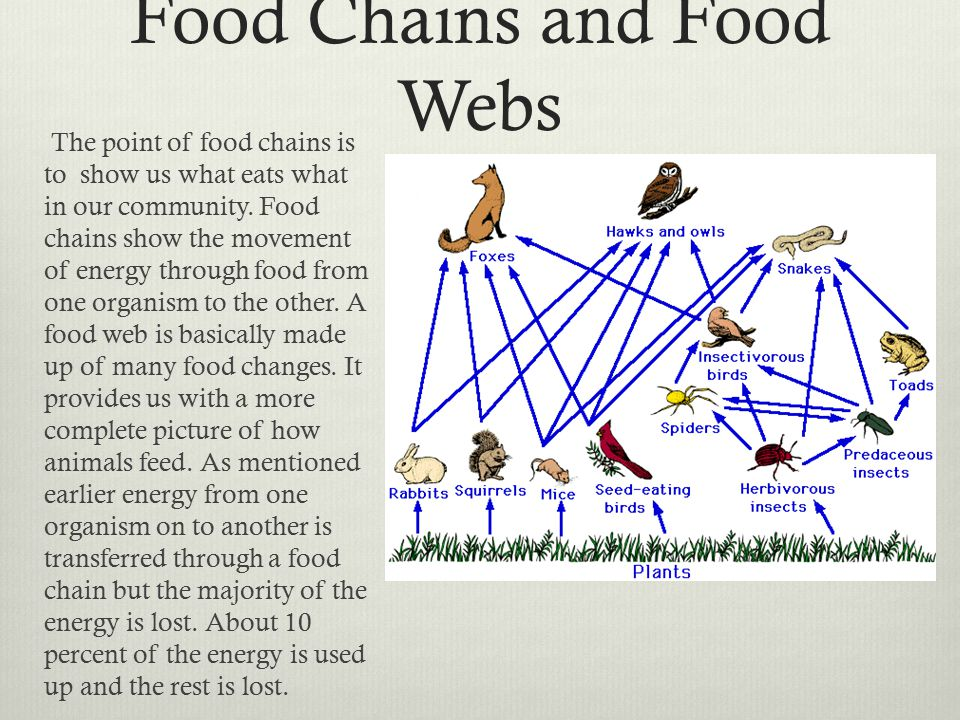 Food Chains and Food Webs The point of food chains is to show us what eats what in our community.