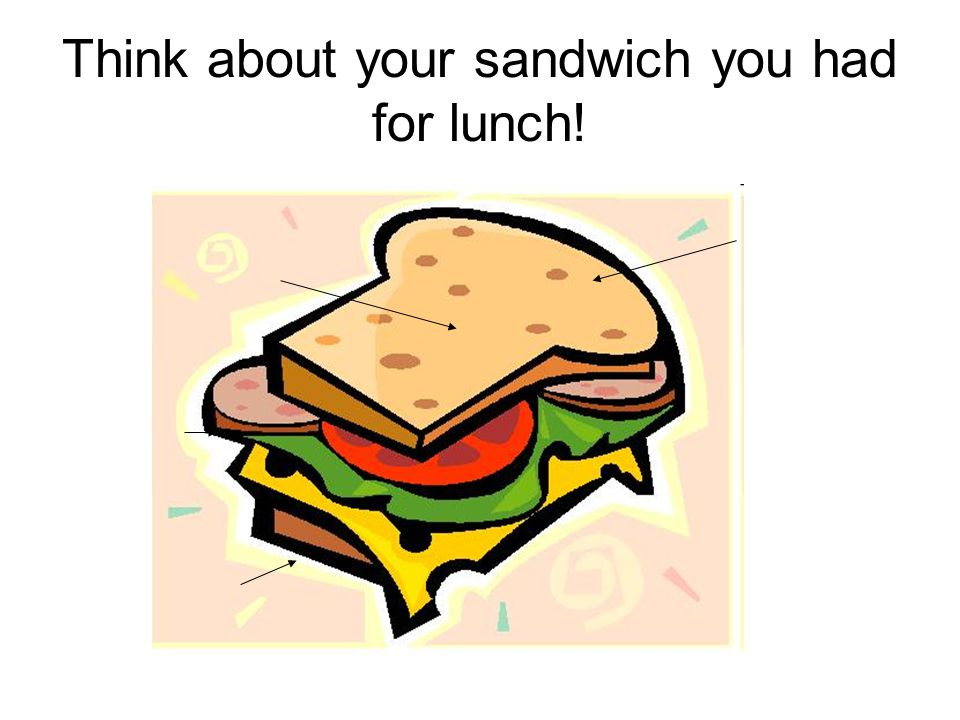 Think about your sandwich you had for lunch!