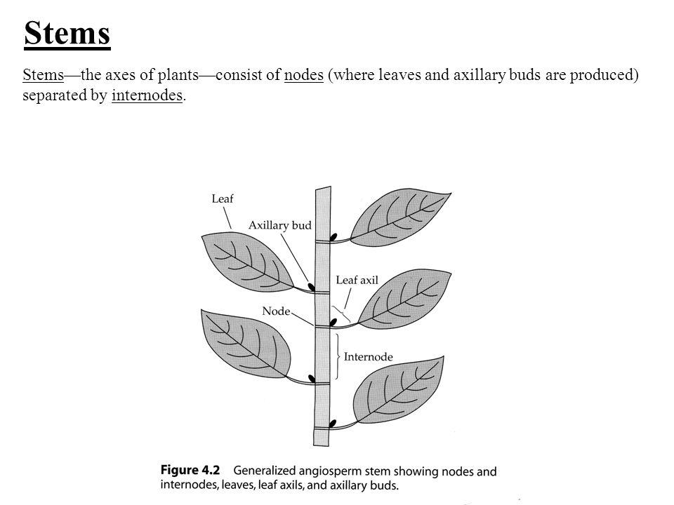 Morphology Of Plants Objectives Define Plant Morphology Describe