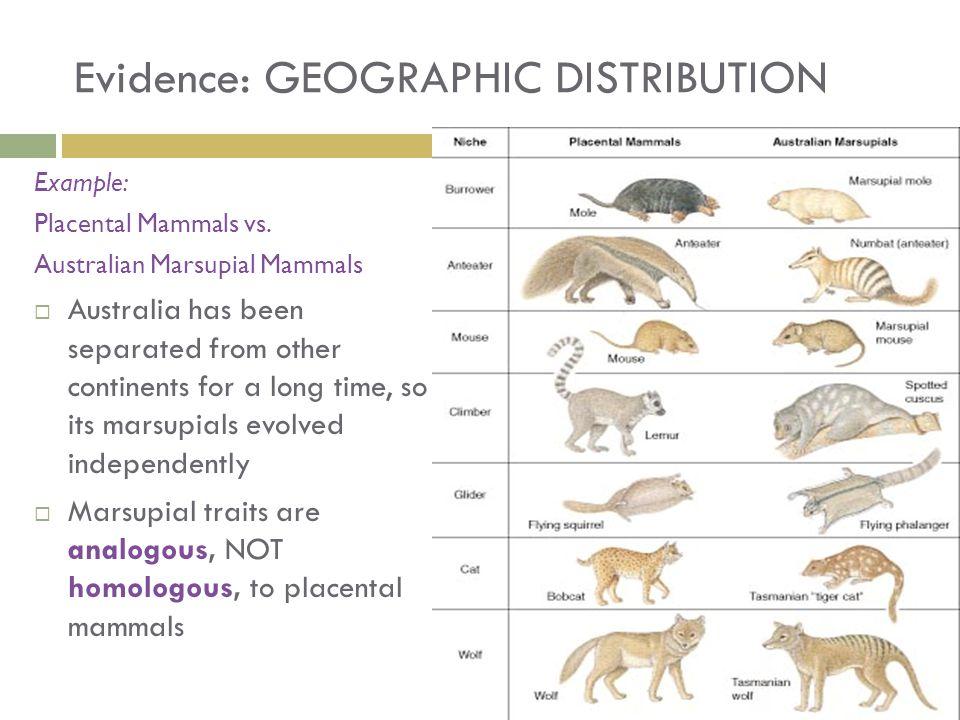 Geographical Evidence For Evolution Worksheet llamadirectory – Evidence of Evolution Worksheet