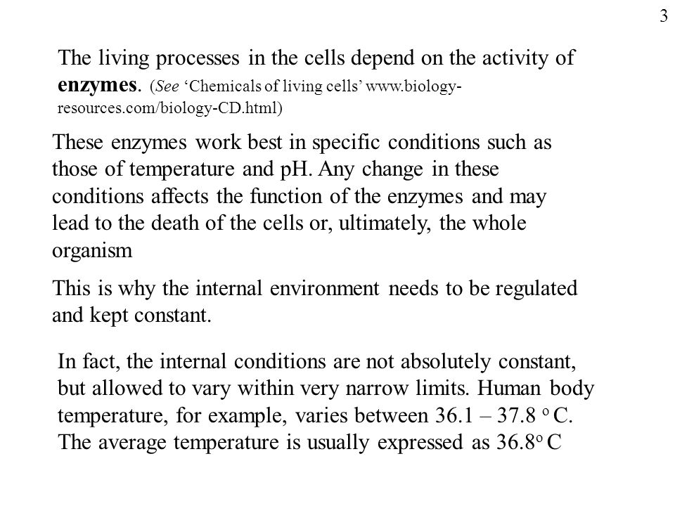 The living processes in the cells depend on the activity of enzymes.