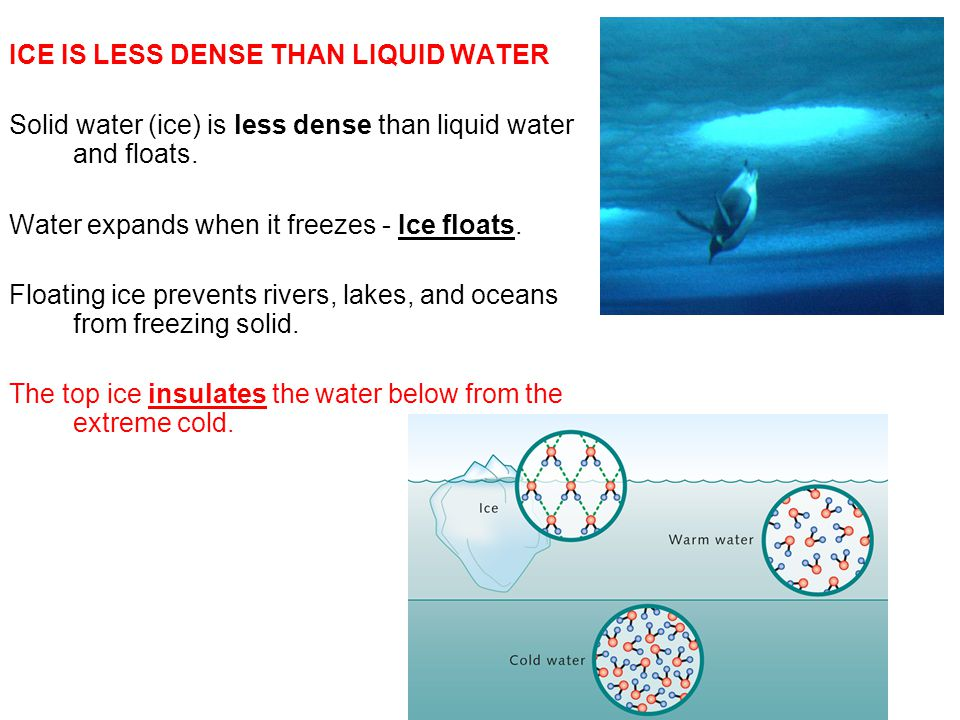 ICE IS LESS DENSE THAN LIQUID WATER Solid water (ice) is less dense than liquid water and floats.