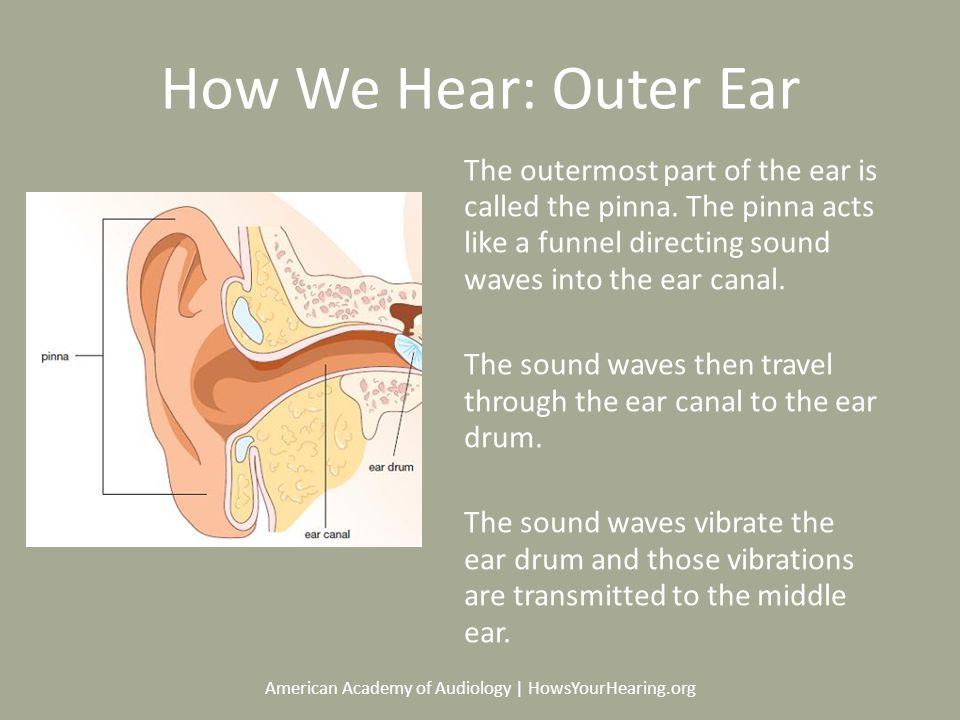 American Academy of Audiology | HowsYourHearing.org How We Hear: Outer Ear The outermost part of the ear is called the pinna.