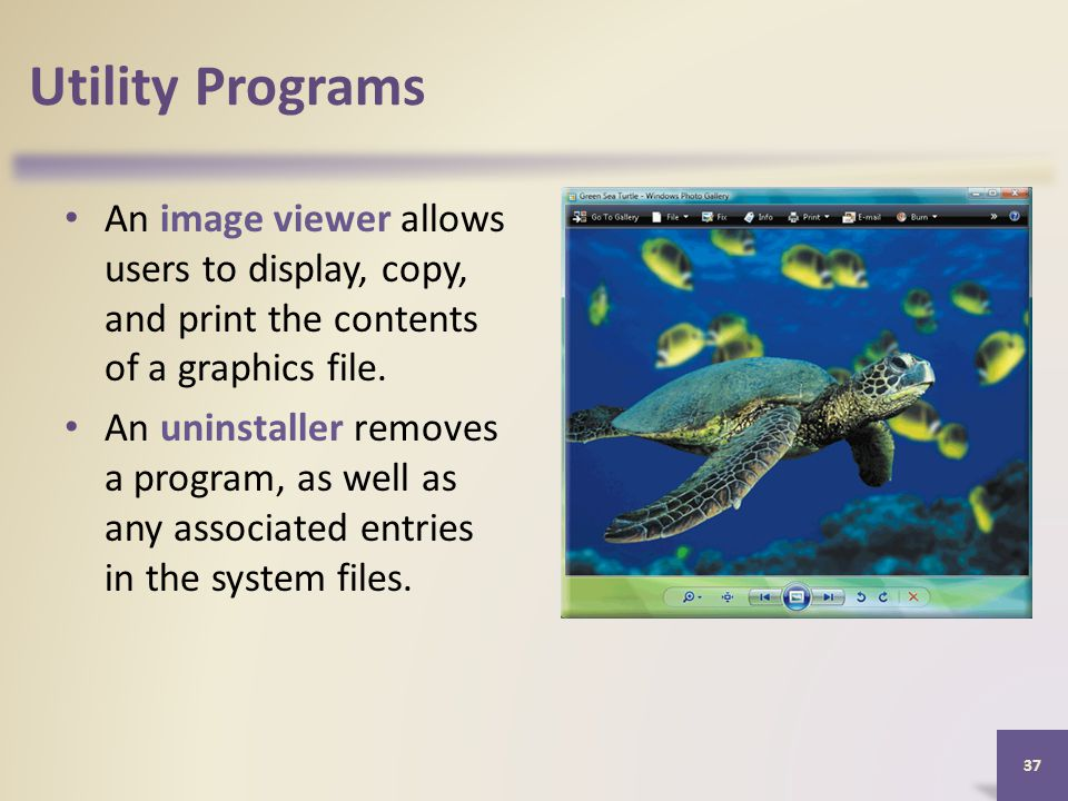 Utility Programs An image viewer allows users to display, copy, and print the contents of a graphics file.