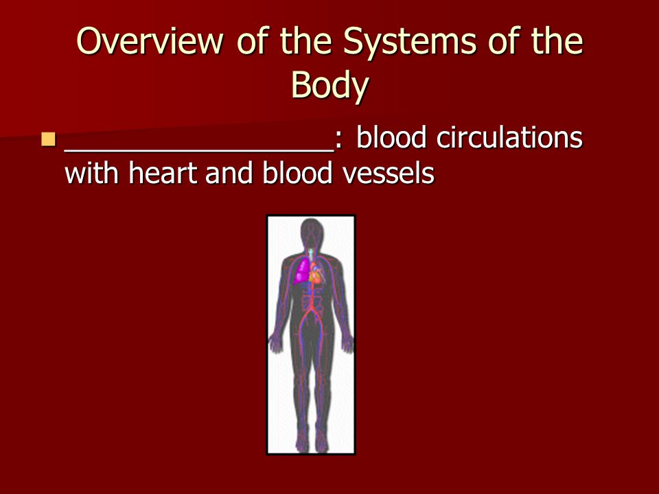 First Anatomy and Physiology quiz/test on MONDAY!!! 1- systems and ...