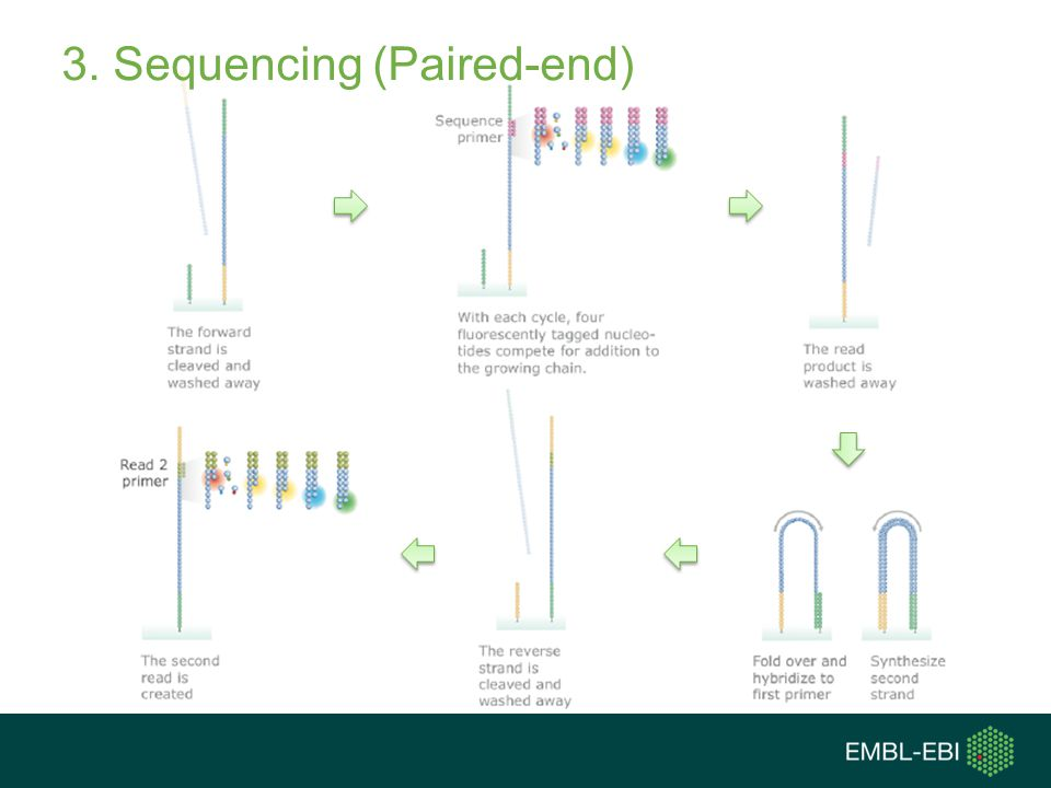 3. Sequencing (Paired-end)