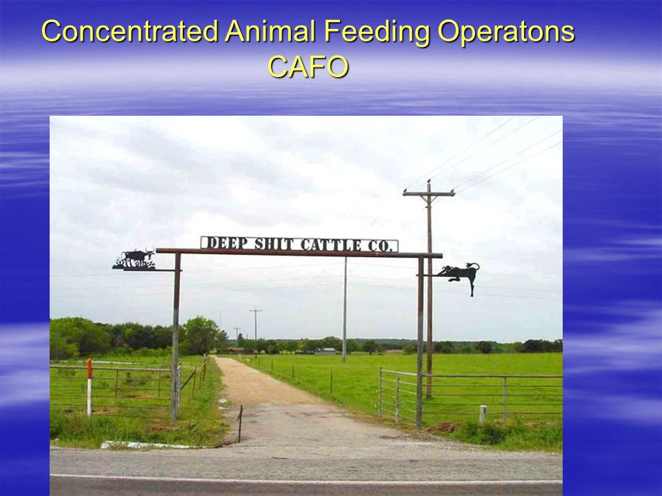 Concentrated Animal Feeding Operatons CAFO