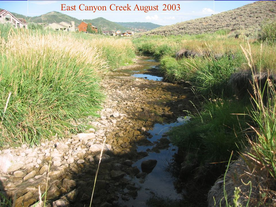 East Canyon Creek August 2003