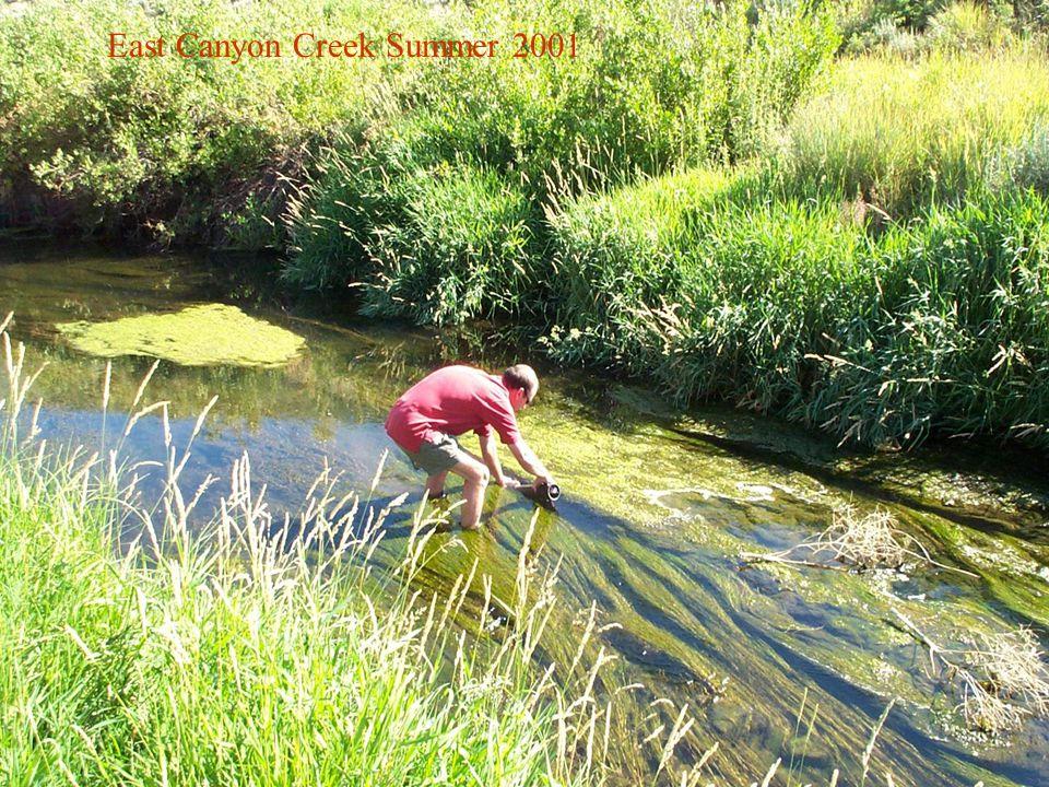 East Canyon Creek Summer 2001