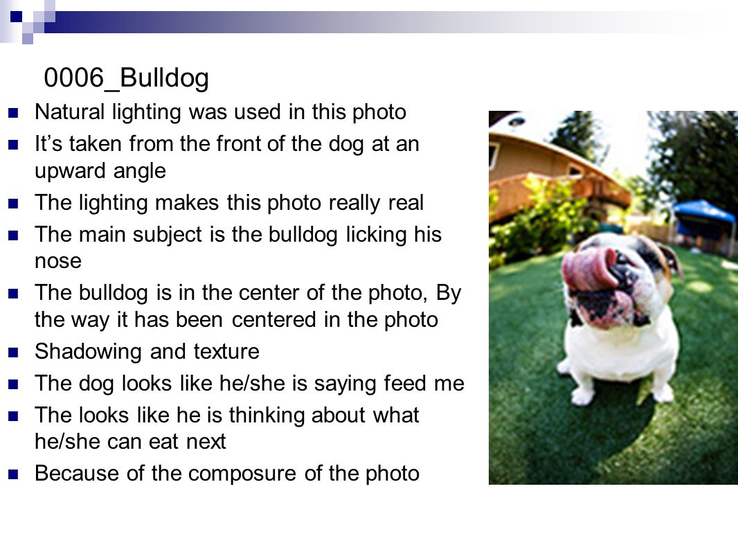 0006_Bulldog Natural lighting was used in this photo It's taken from the front of the dog at an upward angle The lighting makes this photo really real The main subject is the bulldog licking his nose The bulldog is in the center of the photo, By the way it has been centered in the photo Shadowing and texture The dog looks like he/she is saying feed me The looks like he is thinking about what he/she can eat next Because of the composure of the photo