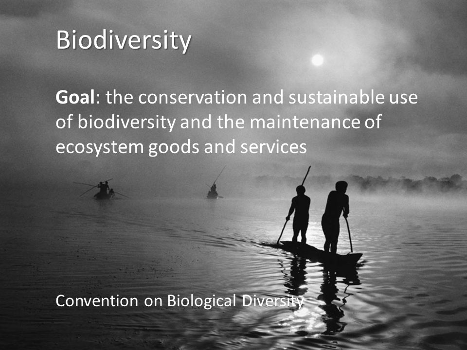 Biodiversity Goal: the conservation and sustainable use of biodiversity and the maintenance of ecosystem goods and services Convention on Biological Diversity