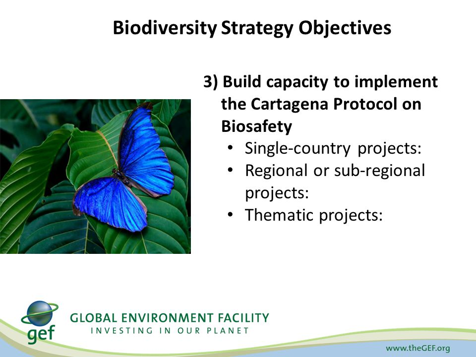 3) Build capacity to implement the Cartagena Protocol on Biosafety Single-country projects: Regional or sub-regional projects: Thematic projects: Biodiversity Strategy Objectives