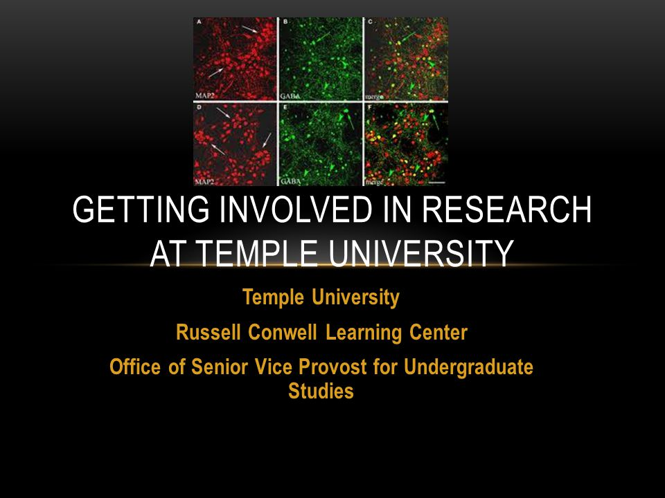Temple University Russell Conwell Learning Center Office of Senior Vice Provost for Undergraduate Studies GETTING INVOLVED IN RESEARCH AT TEMPLE UNIVERSITY