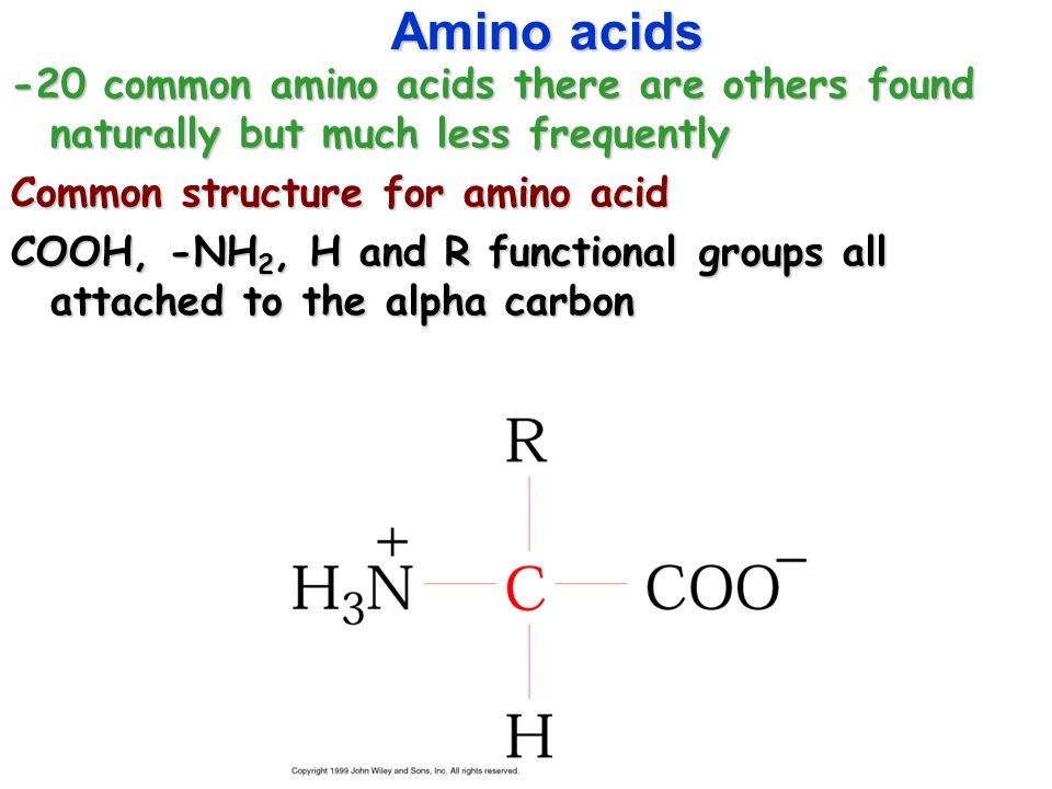 Chapter 4 amino acids amino acids 20 common amino acids there are 2 amino acids 20 common amino acids there thecheapjerseys Choice Image
