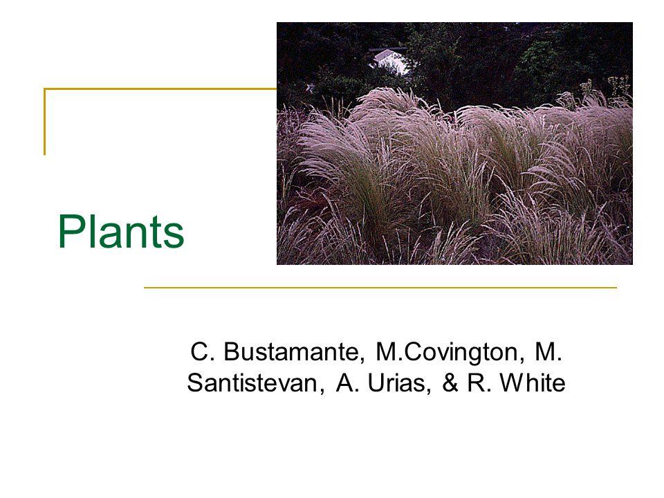 Plants C. Bustamante, M.Covington, M. Santistevan, A. Urias, & R. White