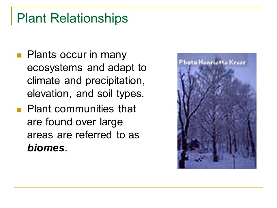 Plant Relationships Plants occur in many ecosystems and adapt to climate and precipitation, elevation, and soil types.