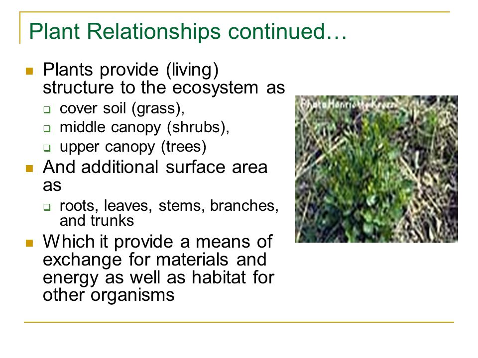 Plant Relationships continued… Plants provide (living) structure to the ecosystem as  cover soil (grass),  middle canopy (shrubs),  upper canopy (trees) And additional surface area as  roots, leaves, stems, branches, and trunks Which it provide a means of exchange for materials and energy as well as habitat for other organisms