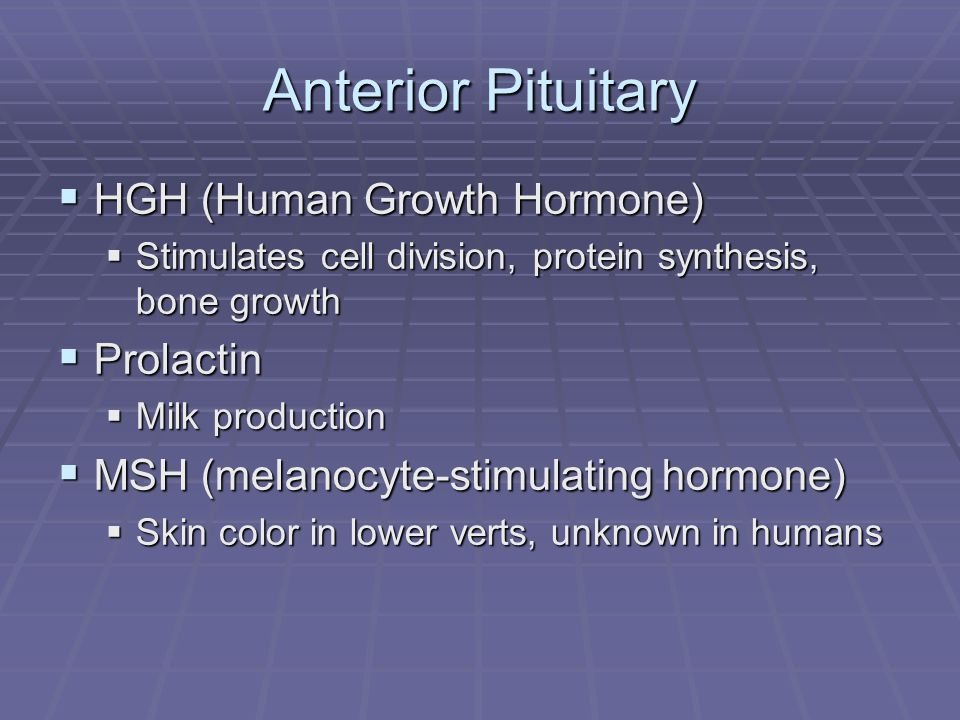 Anterior Pituitary  HGH (Human Growth Hormone)  Stimulates cell division, protein synthesis, bone growth  Prolactin  Milk production  MSH (melanocyte-stimulating hormone)  Skin color in lower verts, unknown in humans