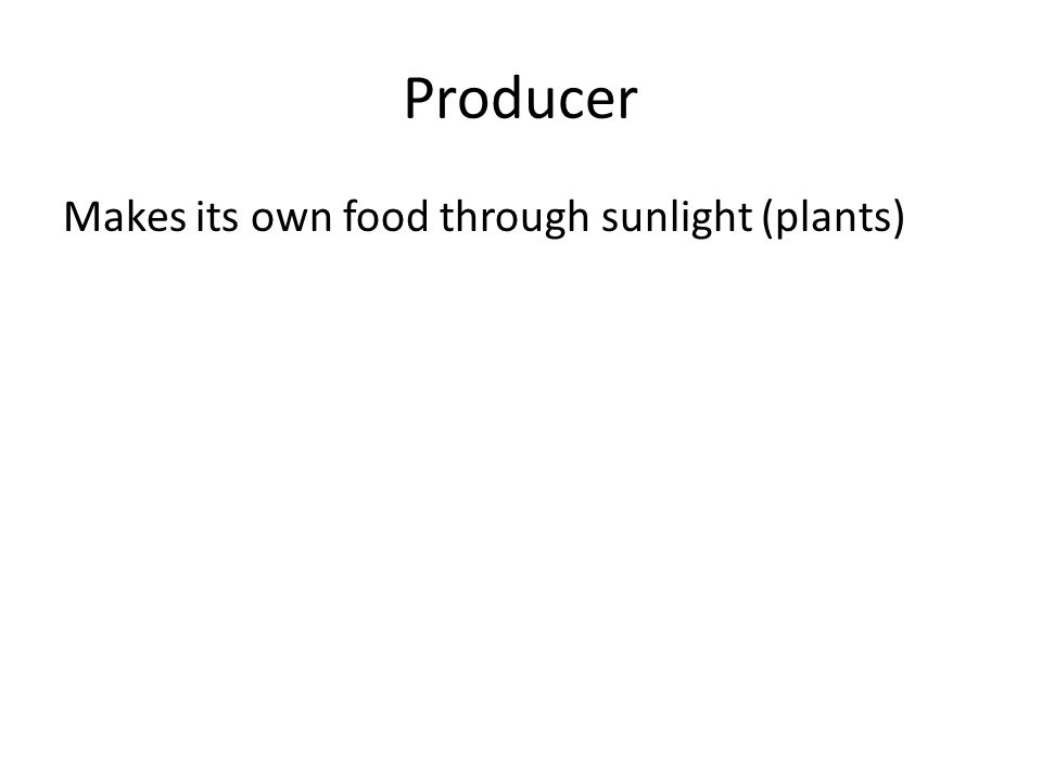 Producer Makes its own food through sunlight (plants)