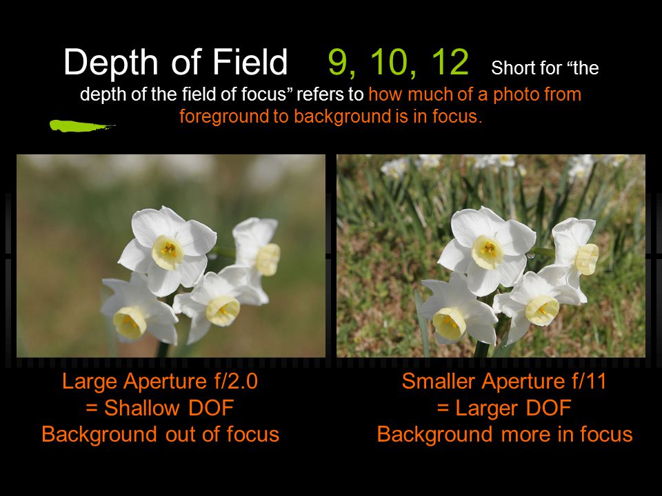 Depth of Field9, 10, 12 Short for the depth of the field of focus refers to how much of a photo from foreground to background is in focus.