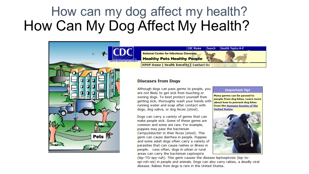 How Can My Dog Affect My Health